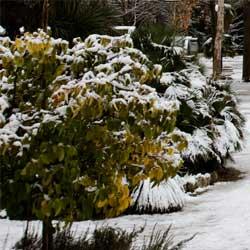 shrubs_1