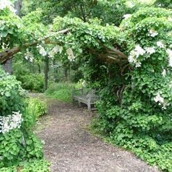 gardenaccents2
