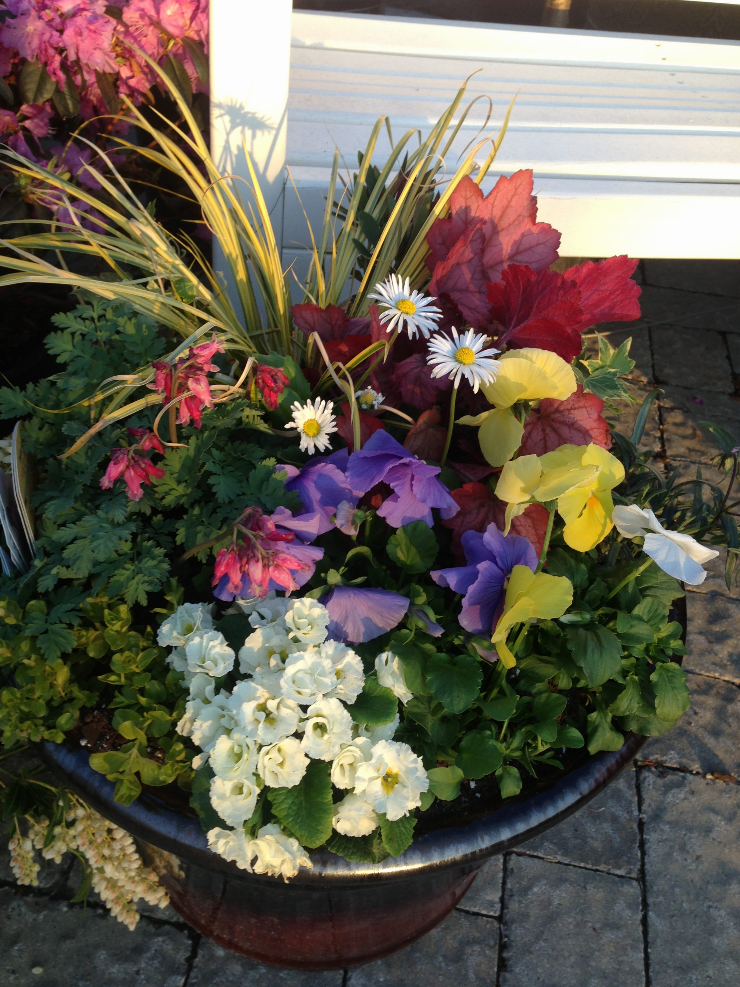 Early Spring Planter With Carex Pansies And Coral Bells