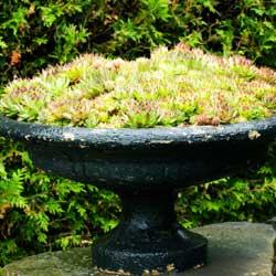 succulent-1
