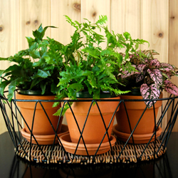 Three pots