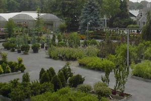 trees, shrubs, plant nursery, bayport flower houses, bayport, ny