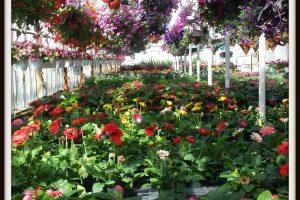 garden, plants, flowers, bayport flower houses, bayport, ny