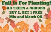 trees, shrubs, bayport flower houses, sale